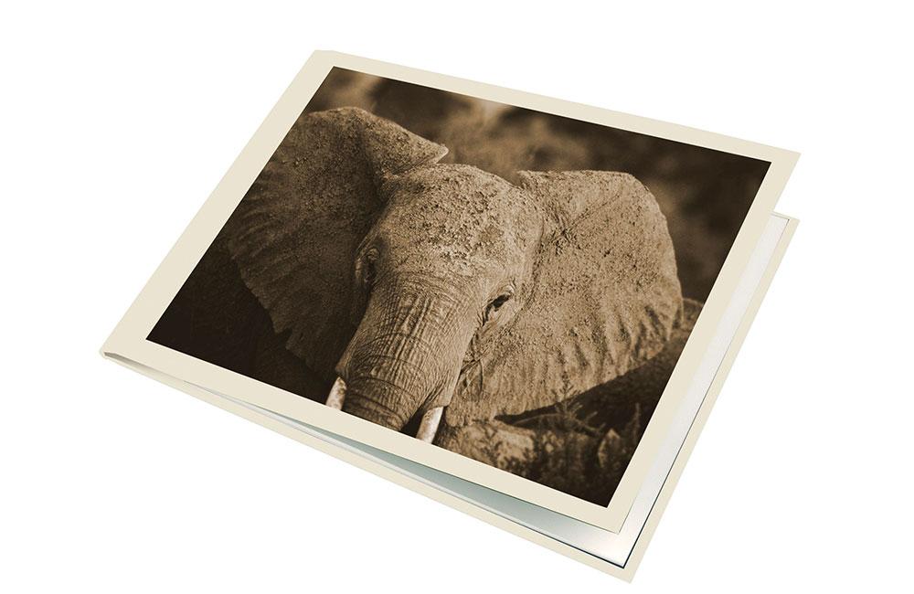 Transfer-elefant